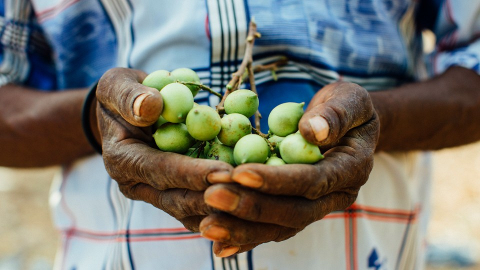 grapes in hands