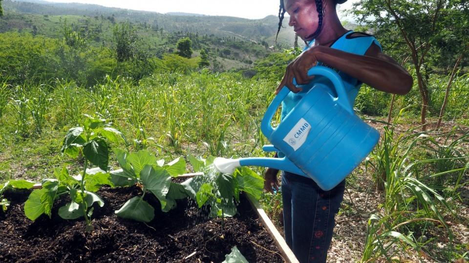Garden starter. The power of planting.