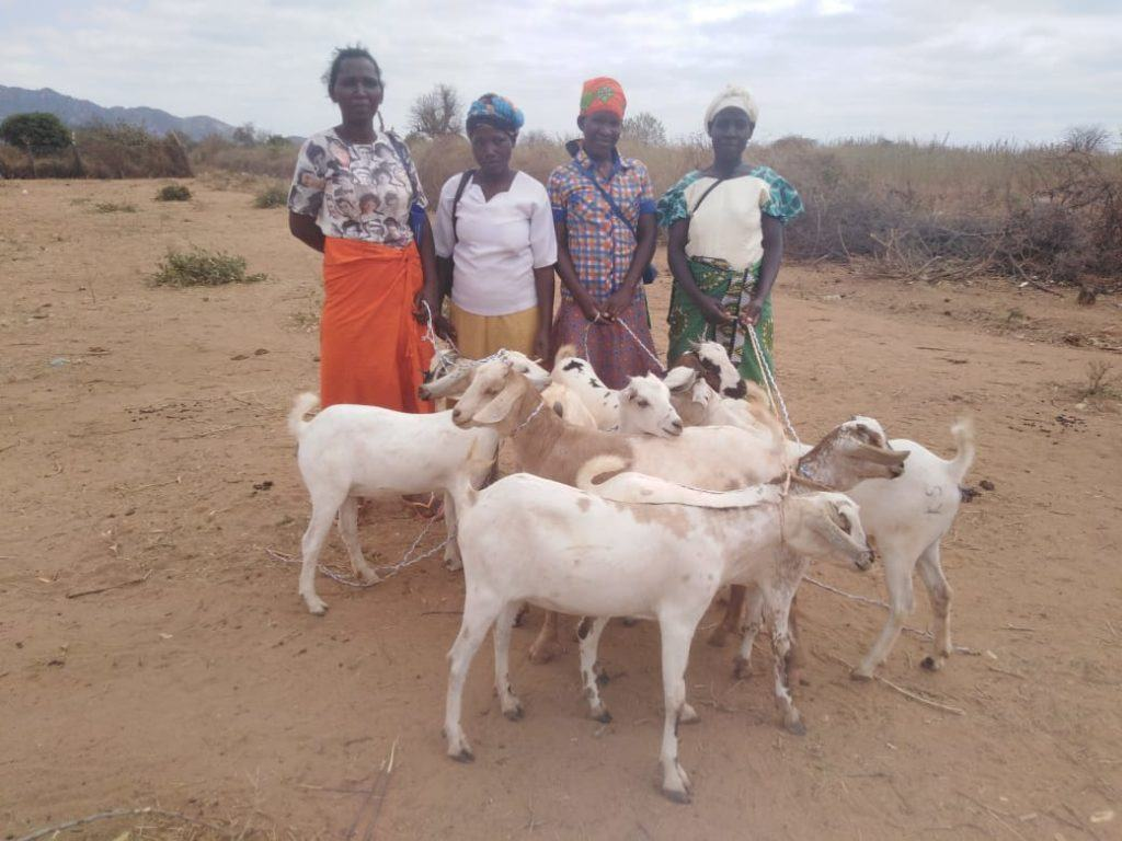 A family of goats - giving tuesday