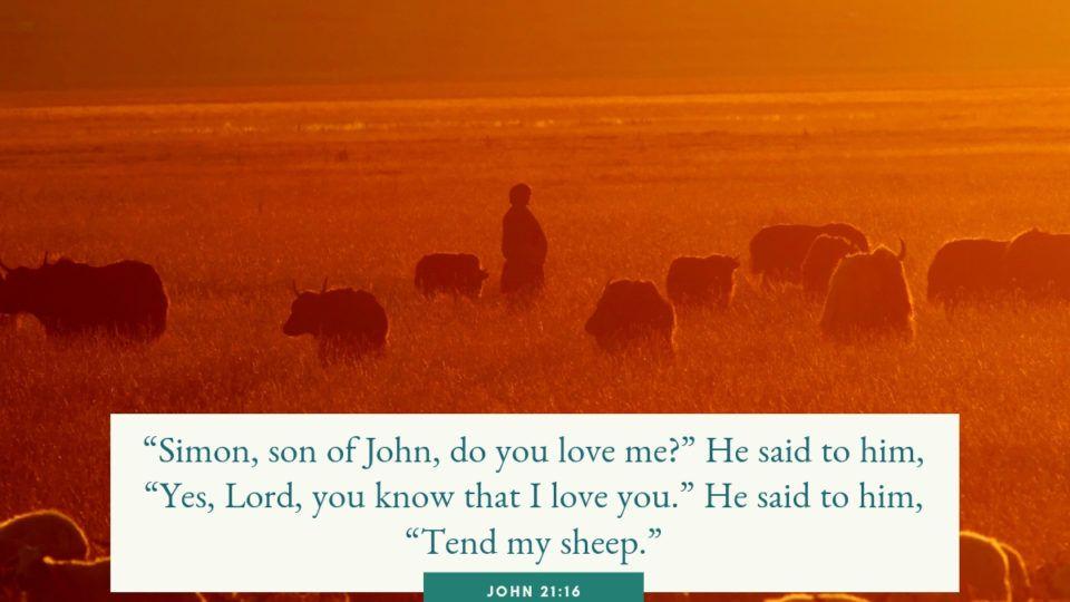 sheepherder tending to his sheep