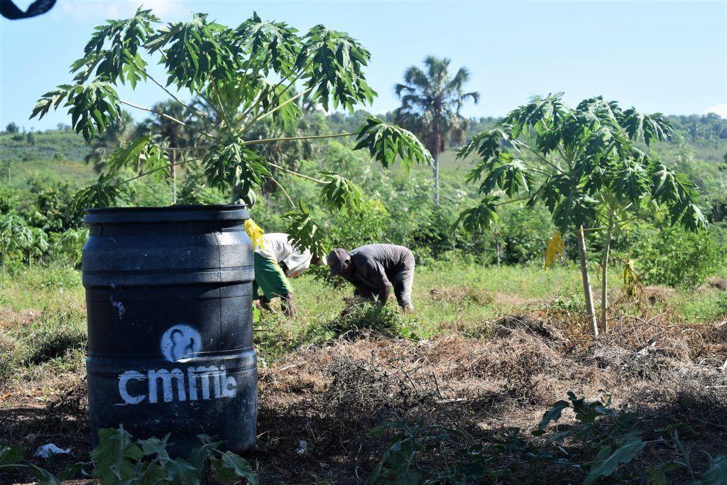 cmmb's agronomy project in cote-de-fer, Haiti