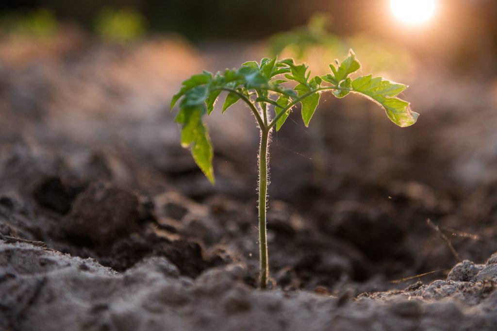 a plant grows in a garden