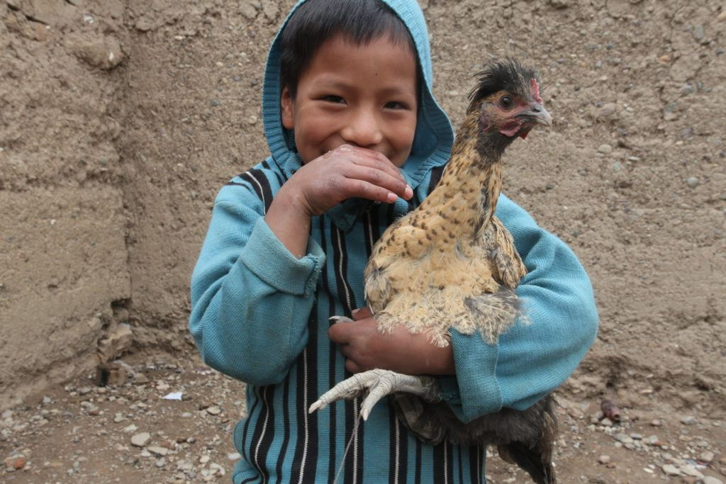 A boy smiles and holds a chicken in his arms