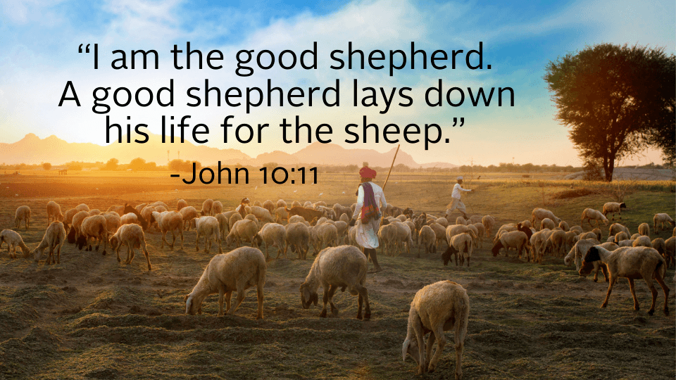 image for weekly reflection shepherd quote